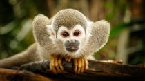 What is The Gemini Spirit Animal? (10 Meaningful Animals)